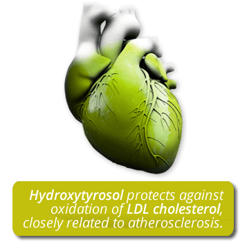 Hydroxytyrosol protects against oxidation of  LDL cholesterol, closely related to atherosclerosis